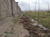 آغاز کاشت درخت در شهرک آزمایش انجمن حمایت زندانیان اردبیل